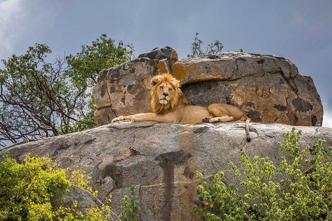 5 Days Safari Tour Tanzania