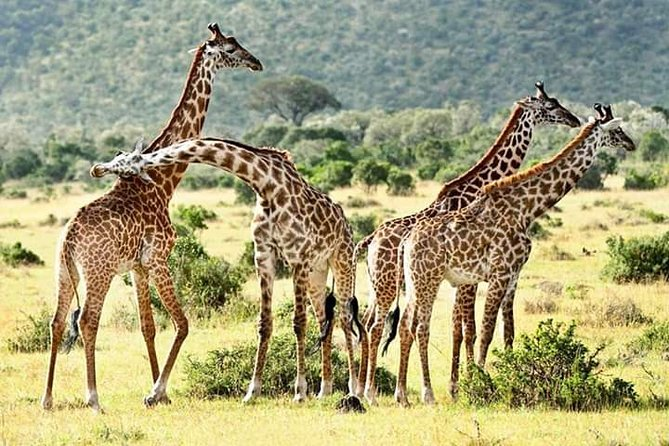 hell's gate national park private tour bike tour from your hotel in nairobi