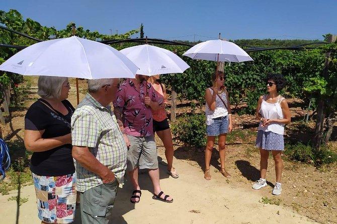 PRIVATE Wine Tasting and Pottery in Crete area Heraklion