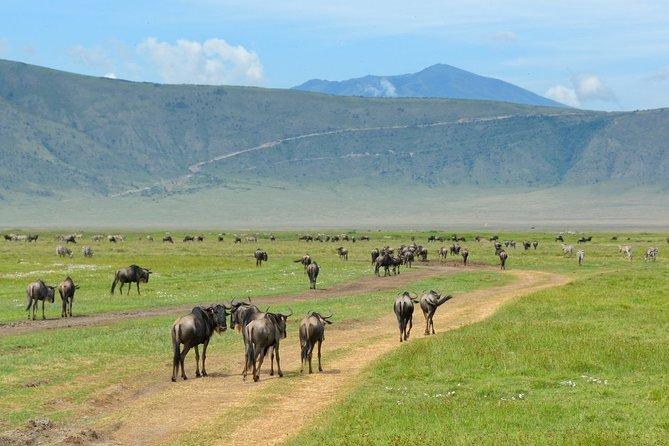 Tanzania 5 Days Lodge Safari