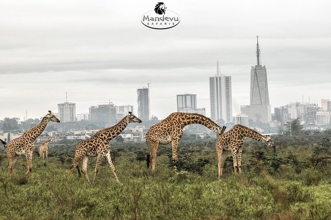 Daily tours to Nairobi National Park