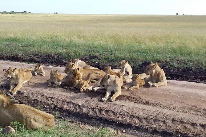 Explorer Kenya Safaris masai mara 4 days