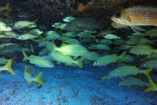 Scuba Diving at Catalina Island - 2 tank - for Certified Divers