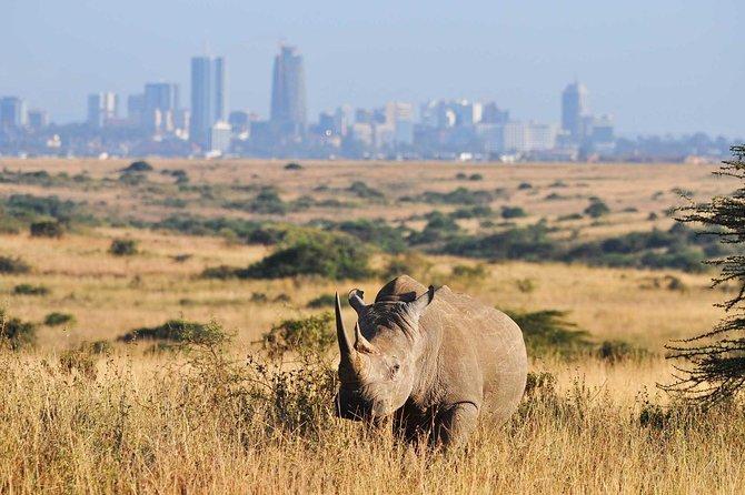 Half day Nairobi National Park Tour