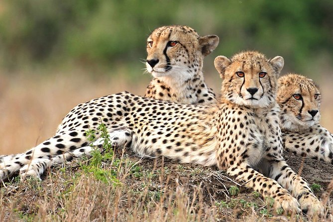 Ultimate Cheetah Experience & Botanical Garden Tour