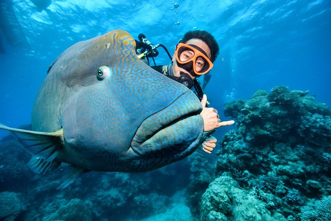 Great Barrier Reef Eco Snorkel and Dive Cruise from Cairns - Including Lunch