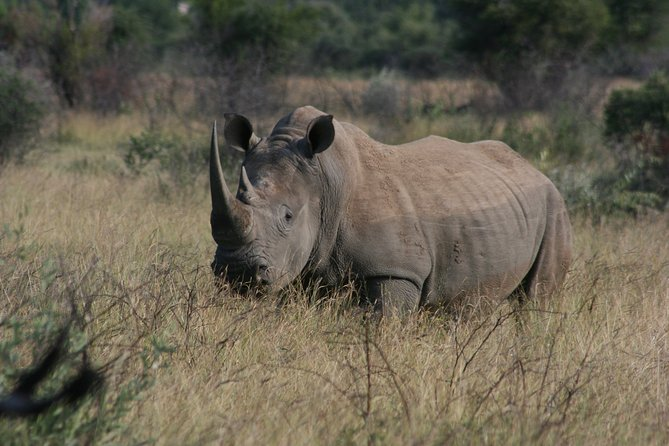 Rietvlei Nature Reserve Half-Day Tour from Johannesburg