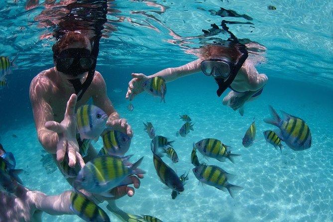 Costa Maya Snorkel Tour