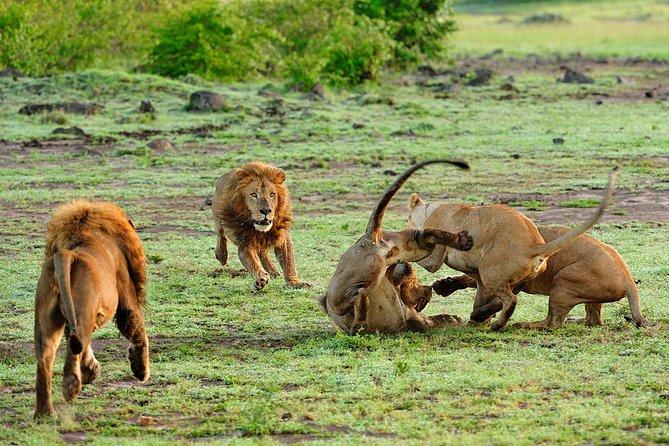 Affordable Budget Tanzania Safari 4 Days