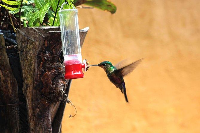 Private Getaway Tour from Bogota • Hummingbirds & Salt Cathedral