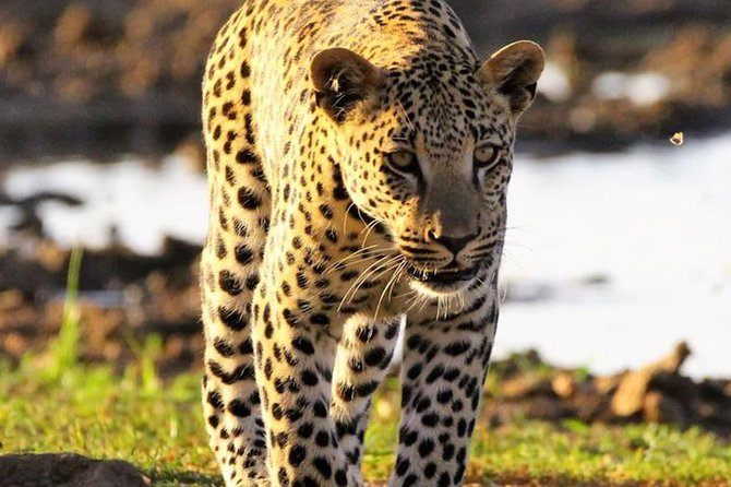 Exclusive Cat Unlimited and Game Drive Tour