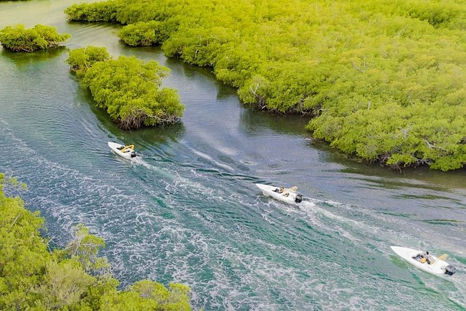 Jungle Tour . Lagoon, Mangrooves & Snorkel for Couples