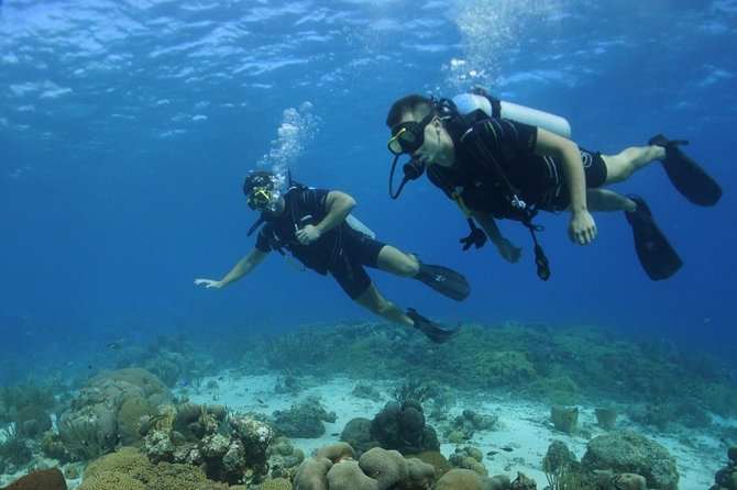 Guided Shore Dive for Certified Divers with Scubaçao (1 tank)