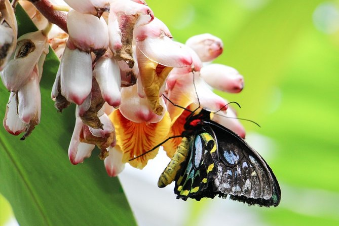 Australian Butterfly Sanctuary- Virtual Interactive Tour With Private Guide