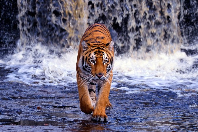 5-Day Golden Triangle Tour with Ranthambore Tiger Tour(Taj Mahal Sunset/Sunrise)