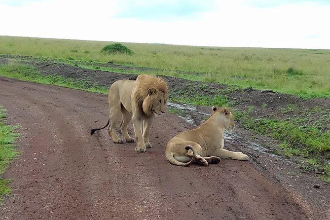 8 days masai mara migration photographer only