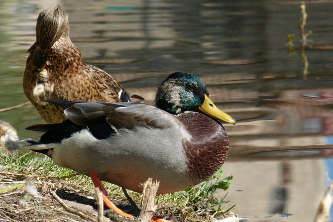 The Verde River Adventure Nature Scavenger Hunt