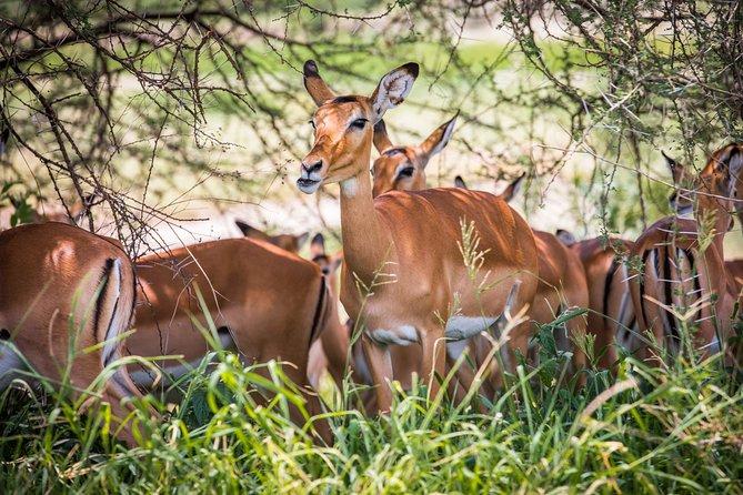 2 Days Safari Tour Tanzania