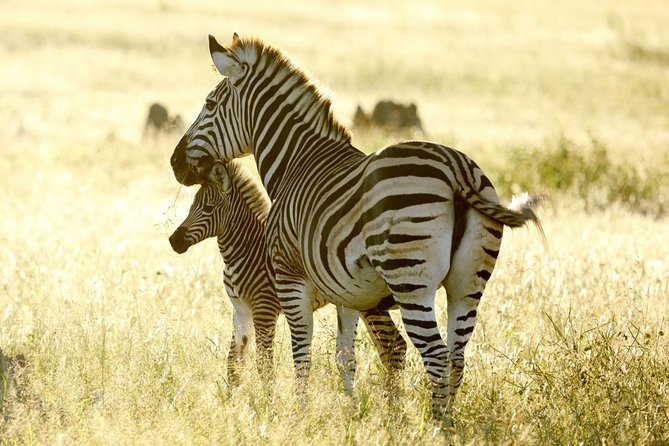 Full-Day Private Guided Safari Tour of Hwange with Lunch
