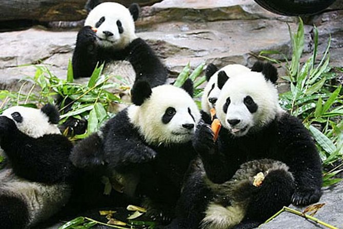 Guangzhou Chimelong Safari Park Private Guided Tour
