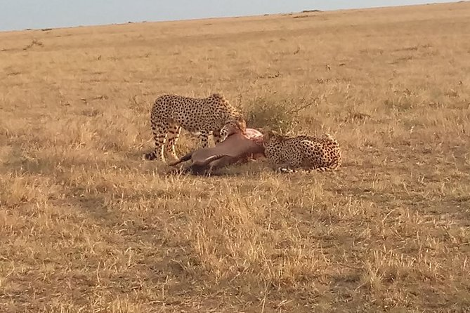 7 Days Safari to Aberdare N/P, Nakuru N/P, Maasai Mara N/R and Amboseli N/P.