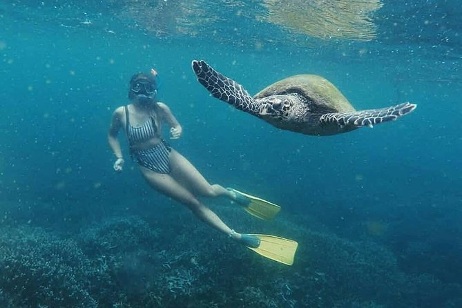 Snorkeling with Turtles in Mirissa