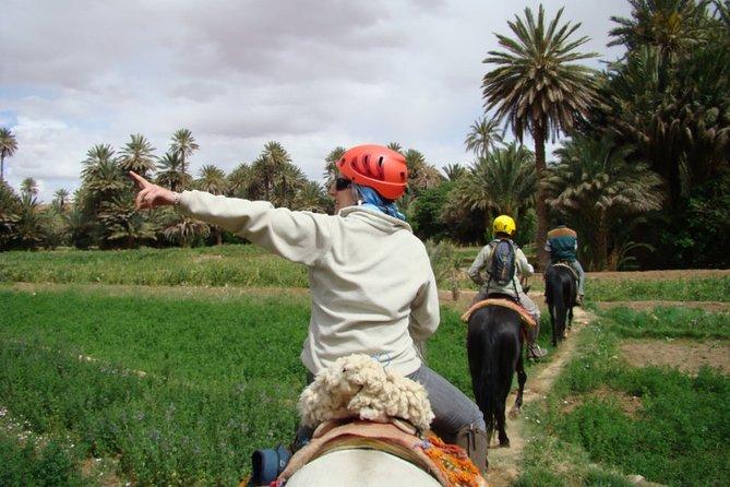 Ride Berber horses in Todra Gorge - Aventures Verticales Maroc