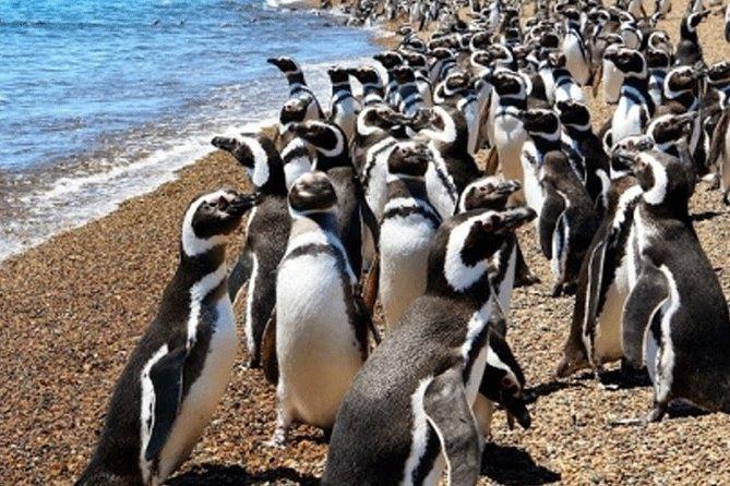Punta Tombo penguins colony plus toninas watching boat trip