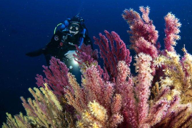 Scuba diving in Calabria, Italy