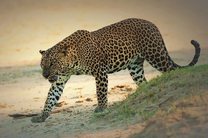 Special Half Day Yala Safari with Guide