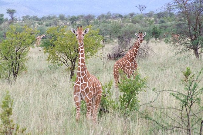 Tsavo East National Park 3 days: Sentrim camp and Rhino Valley