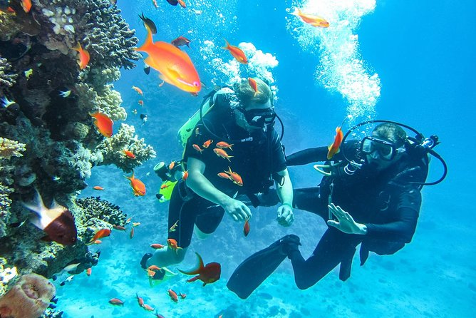 Scuba diving Sharm El Sheikh