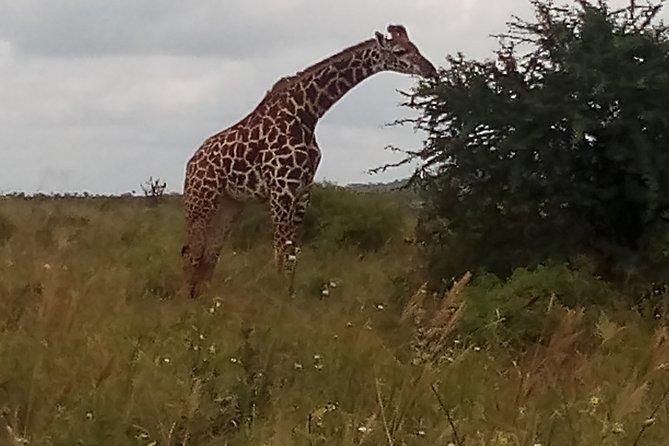5 Days Safari to Amboseli N/P and Tsavo West N/P.