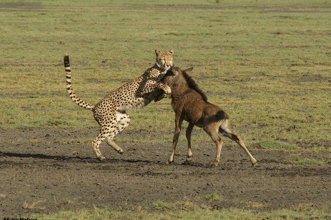 safari to grumeti