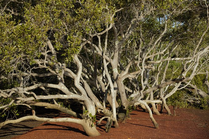 Private Full-Day Guided Tour with workshop: Karragarra and Macleay Island