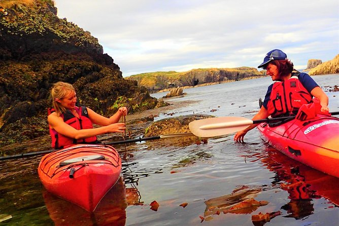 Kayak and discover the secrets of seaweed. Cork. Guided. 3½ hours.
