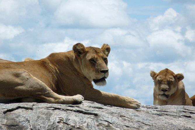 3 Days Lodge Safari