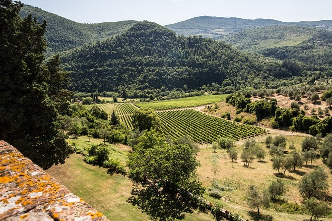 Tour of 900year old secret cellars + tasting of 3 wines and bread with EVO oil