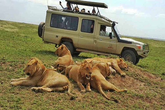 10 Days, 9 Nights - Lake Nakuru, Maasai Mara, Naivasha, Amboseli & Tsavo Safari