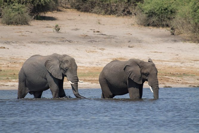 Full-Day Safari Tour to Chobe National Park with Boat Ride