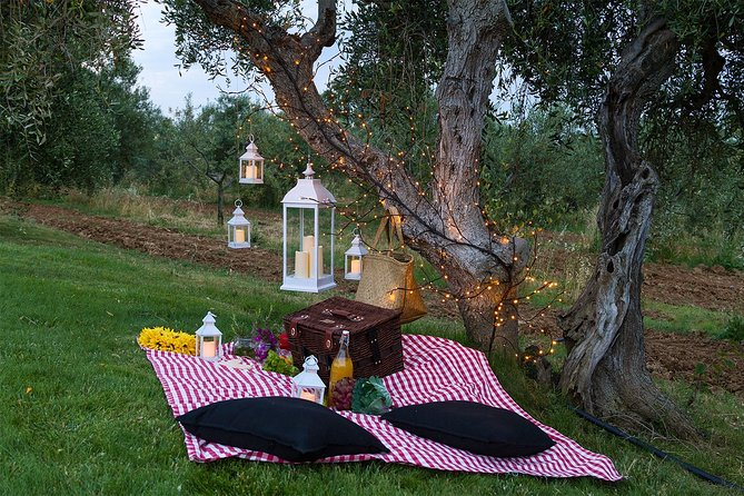 Pic Nic in the charming Tuscan Olive Grove