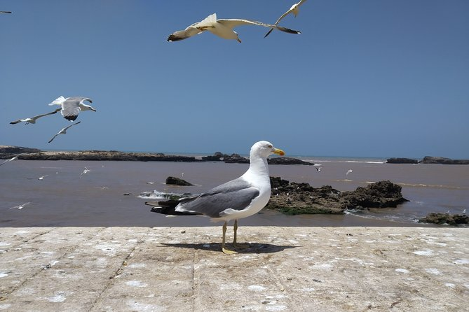 Essaouira Atlantic Gate