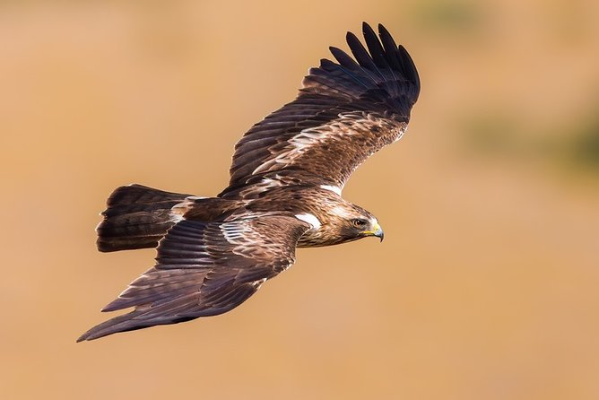 Excursion from Tarifa for bird watching