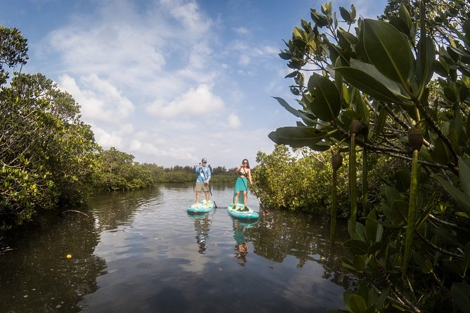 Guided Standup Paddle Experience in Nagura Mangroves