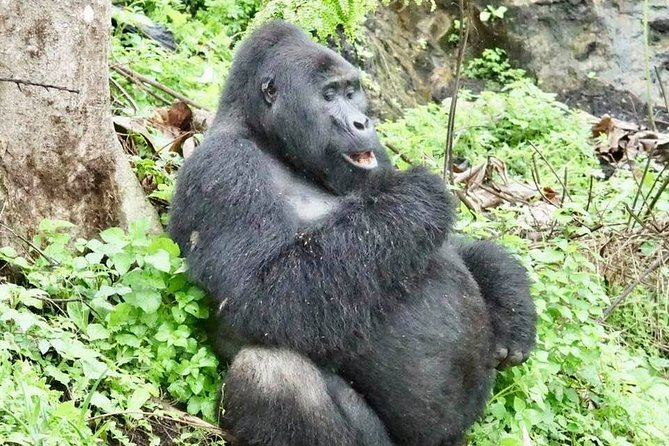 3-Day Private Gorilla Tracking Tour in Bwindi National Park