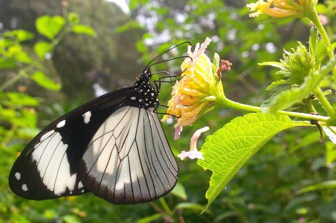 Zanzibar Half Day Private Butterfly Tour