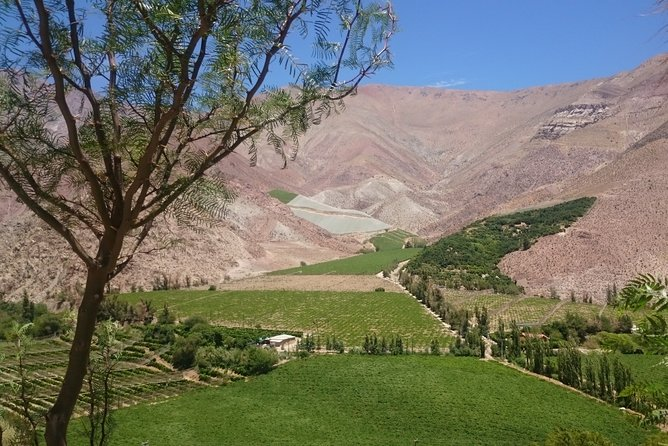 Classic Elqui Valley (Between vineyards and fruit trees)