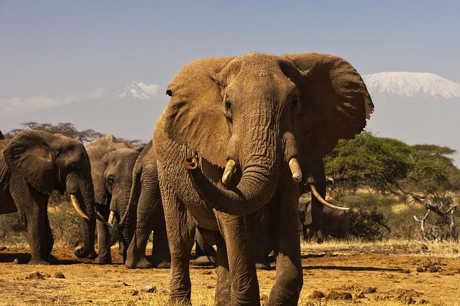 3 Days Enchanting Safari in Amboseli National Park | Mid-range Private Tour