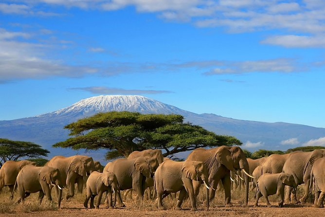 3 Days Amazing Safari in Amboseli National Park | Standard Luxury Camping Tour