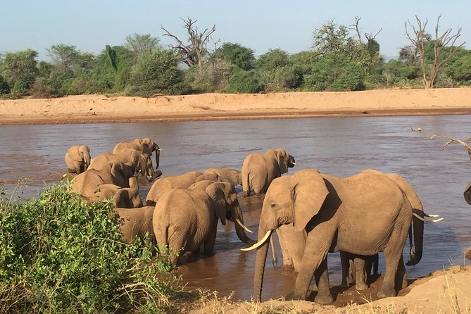 8-Day Private Safari Adventure to Northern Kenya